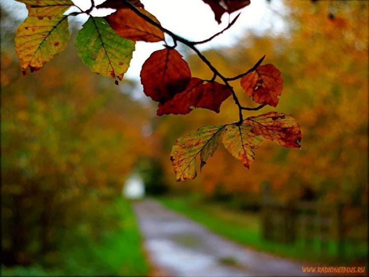 Краски осени(50 фото)
