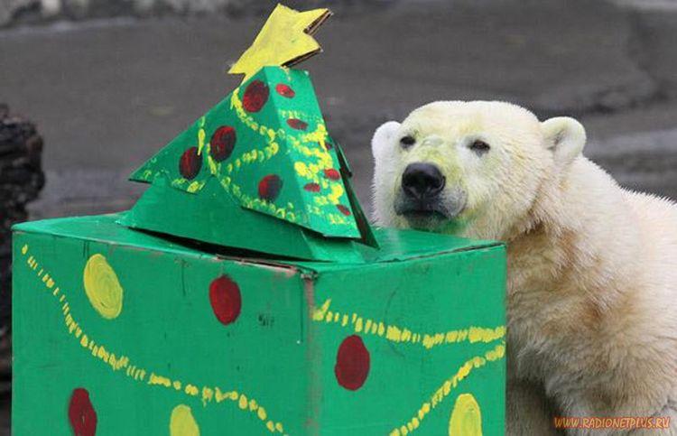 Рождество в зоопарке(24 фото)